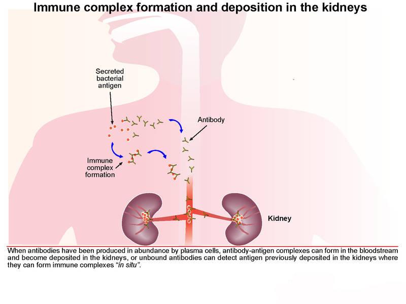 Khi liên cầu xâm nhập vào cơ thể, cơ thể sẽ kích hoạt hệ thống miễn dịch